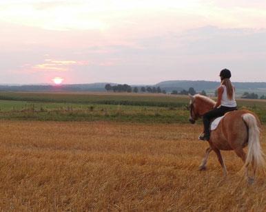 Von morgens bis abends dreht sich in den Ferien alles um's Pferd
