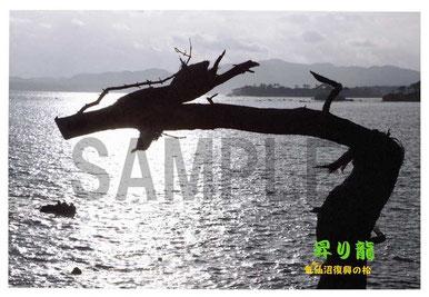 昇り龍 気仙沼復興の松