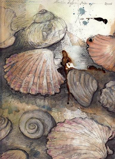 Schalen und Gehäuse von Muscheln und Schnecken