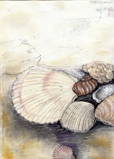 Muschelschalen, Schneckengehäuse