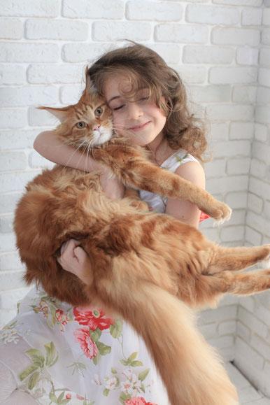 котенок мейн кун, купить котенка мейн кун,   мейн кун, котята мейн кун, купить мейн куна, рыжий котенок мейн кун,   рыжая кошечка мейн кун, кошки, коты, котята, питомник одесса,   фото мейн куна, maine coon, maine coon cattery, kitten maine coon