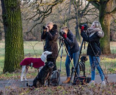 Fotoworkshop mit Hund
