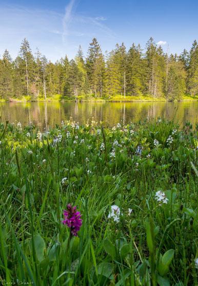 Eine wilde Orchidee im Vordergrund