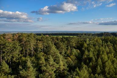 So weit das Auge reicht - Wälder prägen unsere Heimat.