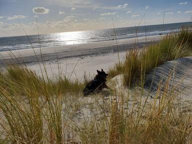 Burgh Haamstede liegt auf der Insel Schouwen  Duiveland. Hunde sind das ganze Jahr am Strand erlaubt. In der Zeit von Mai bis September angeleint.