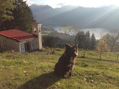 Hund blickt über den Schliersee bei untergehender Sonne