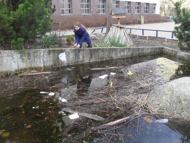 Dringend notwendig war die Reinigung des Schul-Teiches, an dem auch unsere Bienen im Sommer Wasser sammeln. Auf der Eisdecke, die noch vor kurzem darauf war, hatte sich eine Menge Müll angesammelt, der nur im Teich herum schwamm.