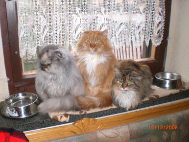 drei Orgelpfeifen / Dasy, Barny und Lissy