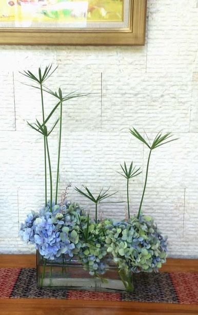 ●リビング パピルス、ツルボ、水色紫陽花