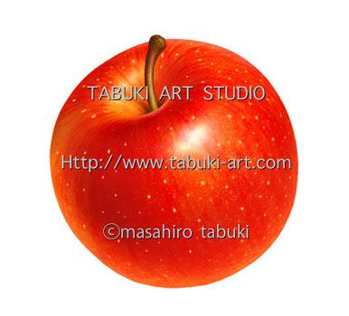 林檎 apple アップル イラスト 果物 フルーツイラスト fruit illustration リアル