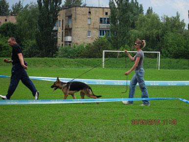 Леста Остлих Аусваль(Диамант-Шенди Нордлих Штерн)-2БП в щенках-на моно и 3БП-на всепородке