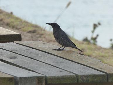 Hey!Bird !
