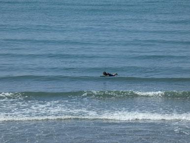 久しぶりに少し波あってよかったですね~