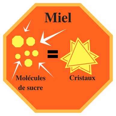Formation des cristaux de sucre dans le miel