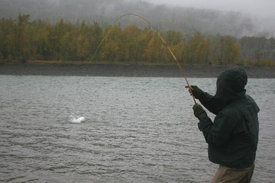 Steelhead Skeena Edwards Bamboo Rod