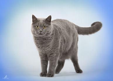 Franziska Spohn Fotografie - Tierfotografie, Katzenfotografie, Indoorshooting, spielende Katze, getigerte Katze