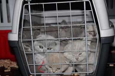 Die beschlagnahmten Katzenwelpen wurden von den Tierschützern ins Tierheim Feucht gebracht. Copyright: Deutscher Tierschutzbund Landesverband Bayern