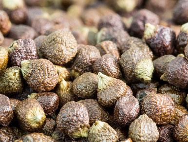 Bild: Shaddiii [CC BY-SA 3.0 (https://creativecommons.org/licenses/by-sa/3.0).** Im Inneren der Melegueta-Beeren wachsen 60–100 bräunliche, 3¬4 mm große, körnige Samen, die zur Gewinnung des Gewürzes getrocknet werden.