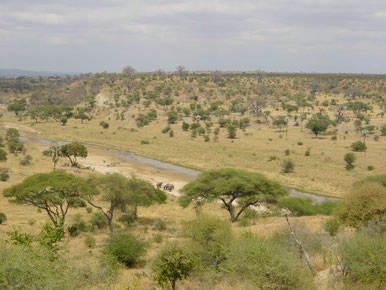Trockensavanne in Tansania, Afrika | Quelle: https://upload.wikimedia.org/wikipedia/commons/5/5a/Tarangire-Natpark800600.jpg