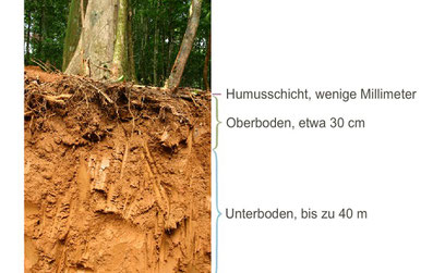 Boden des tropischen Regenwalds | Quelle: https://medienportal.siemens-stiftung.org/105476, © Siemens Stiftung 2016, lizenziert unter CC BY-SA 4.0 international (Lizenztext siehe https://creativecommons.org/licenses/by-sa/4.0/legalcode.de)