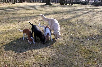 Gemeinsames Schnüffeln: Anton, Molly, Kabou & Amigo