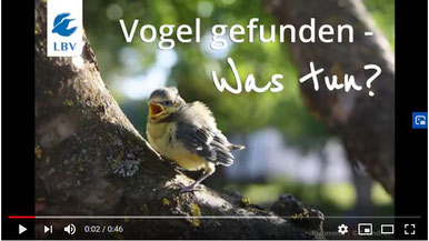 Video (Bild anklicken)