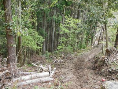 人工林概観