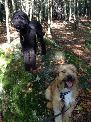 Fiffi und Lumpi - Best Friends :-)