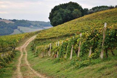 Schilderachtig tafereel van de wijngaarden van Zanchi