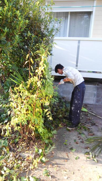 アパートの枝・葉の刈り込み 2