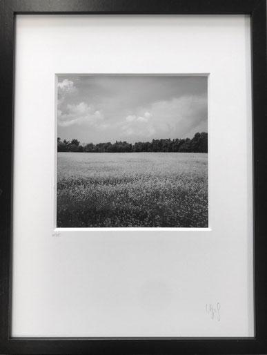 Print 20x20, frame 30x40 cm