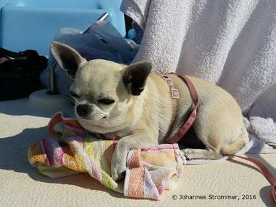 Lilli auf einem Tretboot am Neusiedler See