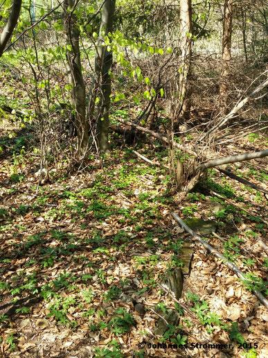 Abbildung 10: Im Vordergrund sieht man ein paar Steine, die die Trasse am rechten Rand begrenzen.  (Waldbahn Rekawinkel)