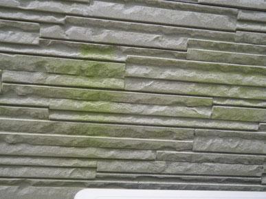熊本市N様家の外壁塗装及び屋根塗装時。外壁クリアー塗装前。コケ発生状況