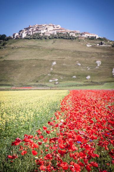 Castelluccio di Norcia: il paese sulla piana in fiore