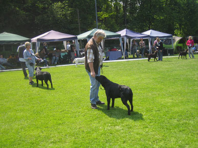 Shadow & Chester in Bad Soden