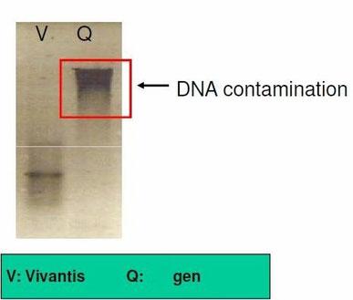 Aufreinigung von RNA aus Blut, RNA isolation from blood