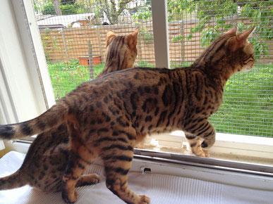 herrliche Aussicht auf den Garten und seine Mäuse