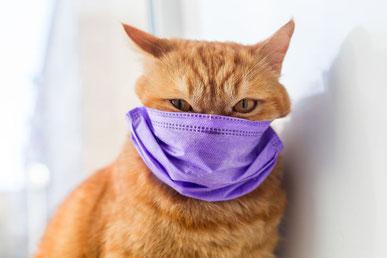 Ursula Hahn-Jansen ist auch während der Corona-Pandemie für Sie und Ihr Tier da.