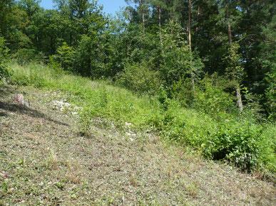 Stapfelnreben: westl. Waldlichtung vor / nach Schnitt im Herbst 2007
