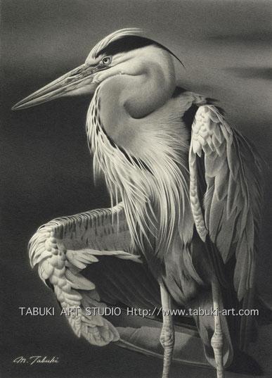 アオサギ,Gray Heron,リアルイラスト,野鳥画,鉛筆画