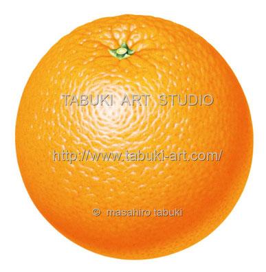 オレンジ RD_10515