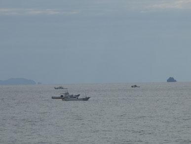 今日はチリメン船が沢山出てました。