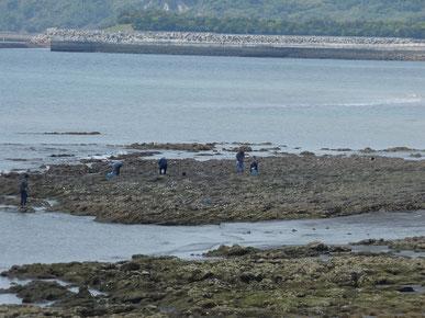 恒例の牡蠣採りも賑わってます。