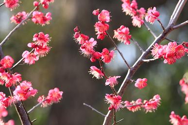 季節の風 2020年2月「早春の香り」