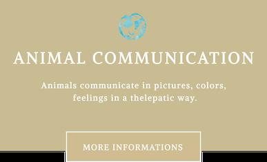 Mit Tieren sprechen - Tierkommunikation
