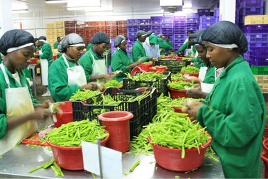 Vegetables and flowers are Kenya's main export goods