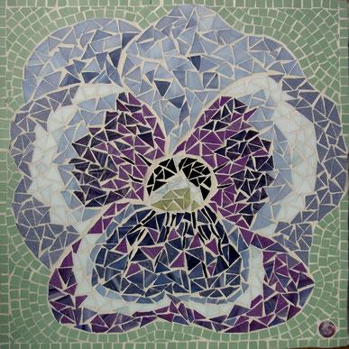 Mosaik-Stiefmütterchen