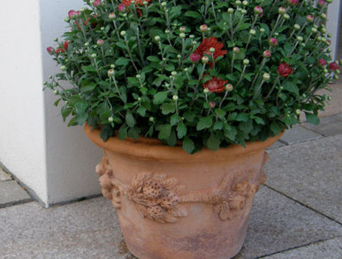 Terracotta-Kübel  aus Impruneta mit Herbstchrysantheme