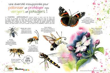 panneaux pédagogiques, illustrations, nature, jardin, pollinisateurs, thématiques, graphisme